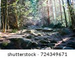 Stony Path Through The Woods In ...