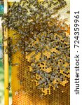 Small photo of bees swarm on a frame with honey