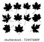 a set of eleven different maple ... | Shutterstock .eps vector #724476889