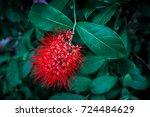 Beautiful Red Bush Willow...