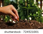 hands of farmer growing and... | Shutterstock . vector #724521001