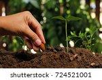 hands of farmer growing and... | Shutterstock . vector #724521001