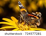 Red Admiral Butterfly With Ful...