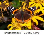 Red Admiral Butterfly With...