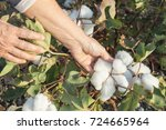 a person harvesting cotton in... | Shutterstock . vector #724665964