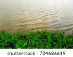 green water plant bed by the... | Shutterstock . vector #724686619