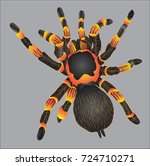 The Hairy Spider  Vector