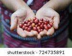 coffee fruit  coffee tree... | Shutterstock . vector #724735891