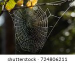 Spider Web  Spider Net And...