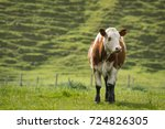 comical image of young cattle...   Shutterstock . vector #724826305