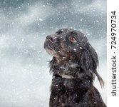Snow Dog.black Pet Dog With...