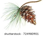 Pine Cone On A Branch ...