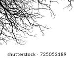 branch structure of tree and... | Shutterstock . vector #725053189