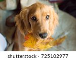 Puppy With Autumn Leaves In Th...