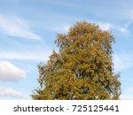 autumn green tree in the blue... | Shutterstock . vector #725125441