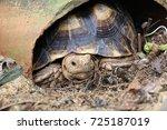 african spurred tortoise at... | Shutterstock . vector #725187019