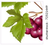 vector. grape cluster with... | Shutterstock .eps vector #72521449