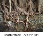 Gnarled Exposed Complex Root...