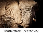 Wild african elephant close up  ...