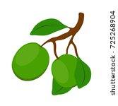 shea cosmetics organic plant....   Shutterstock .eps vector #725268904