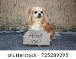 Small photo of Homeless dog and carton with text ADOPT ME, outdoors