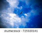 Birds Flying In The Golden Hou...