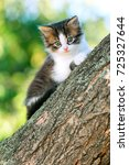 Stock photo portrait of a cute little fluffy kitten climbing on a tree branch in a village in the nature 725327644
