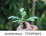 sri lankan natural herbs