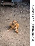 scraping chain dog | Shutterstock . vector #725415049