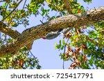 A Red Bellied Wood Pecker Hunt...