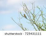 blue tailed bee eater | Shutterstock . vector #725431111