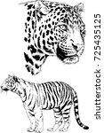 set of vector drawings on the... | Shutterstock .eps vector #725435125