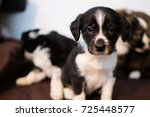 dog puppy animal photography | Shutterstock . vector #725448577