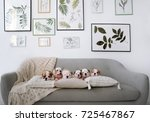 Stock photo five little puppies of the english bulldogs lie on a big sofa in studio 725467867