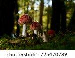 Fly Agaric Mushroom Mushroom I...