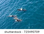 encounter with long finned... | Shutterstock . vector #725490709
