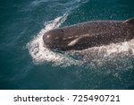 encounter with long finned... | Shutterstock . vector #725490721