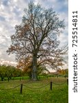 an old oak tree at autumn time | Shutterstock . vector #725514811