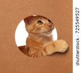 Stock photo cute little orange tabby kitten playing in a cardboard box 725549527