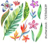 tropic leaves and flower. set... | Shutterstock . vector #725560639