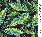 palm tree tropic leaves   hand... | Shutterstock . vector #725560651