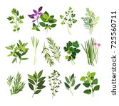 clip art illustrations of herbs ... | Shutterstock .eps vector #725560711