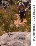 Small photo of A Rock Agama Lizard watches approaching hikers in the Cederberg Wilderness Area, South Africa