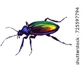 exotic beetle wild insect in a... | Shutterstock . vector #725597794