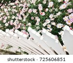 Clump Of Pink Flowers And Whit...