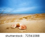 Shells On Sand. Ocean In The...