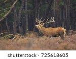 red deer cervus elaphus stag... | Shutterstock . vector #725618605
