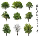 Stock photo trees isolated on white 72566740