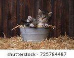 Adorable Kitten With Straw In A ...
