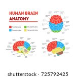 human brain anatomy infographic ... | Shutterstock .eps vector #725792425